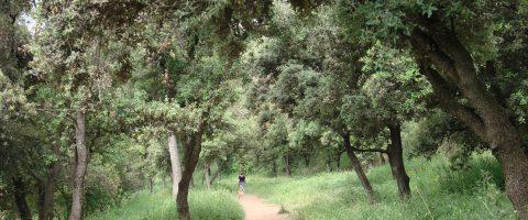 Dintre el Bosc de Can Font